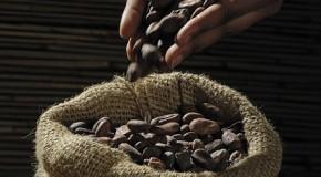 Chocolat équitable