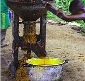 L'huile de palme, cet ingrédient qui se niche dans tous les rayons