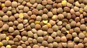 Huiles minérales toxiques : Les lentilles corail d'Auchan pointées du doigt