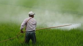 Pesticides. Un cocktail détonant pour les mâles