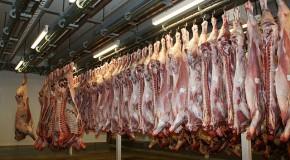 Abattoirs : Un tiers des établissements en non-conformité