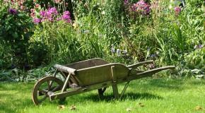 Jardiner sans pesticides : Le purin d'ortie sauvé