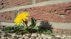 Enquête : Conseils sur les produits phytosanitaires