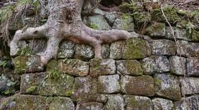 Racines s'introduisant chez le voisin : l'arbre doit parfois être abattu