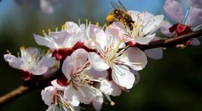 Pesticides. L'Europe au secours des abeilles ?
