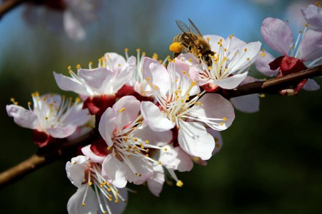 pesticides-europe-abeilles-insecticides-agricoles-neonicotinoides