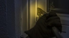 Les alarmes et digicodes ne dissuadent pas les cambrioleurs