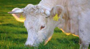 Nouvel étiquetage sur l'origine de la viande et du lait. L'opacité persiste pour plus d'un produit sur deux !