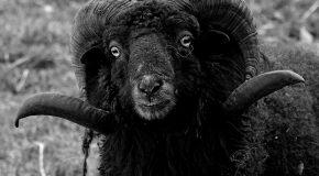 Gaz et électricité Engie, mouton noir du démarchage à domicile