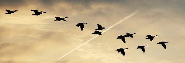 avion-non-indemnisation-collision-oiseau