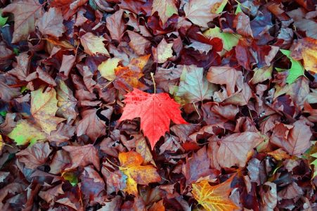 feuilles-mortes-voisinage-jardin