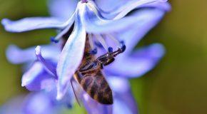 Pourquoi les abeilles sont indispensables ?