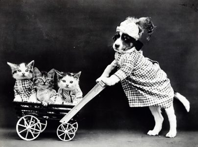 # Vacances garderie animal chien chat