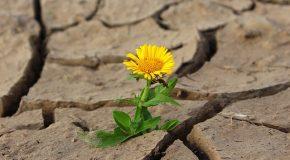 Plan sécheresse. Les promesses évaporées du Gouvernement