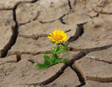 # Plan sécheresse promesses évaporées du Gouvernement