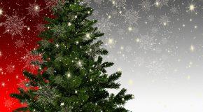 Sapin de Noël. Quel arbre vous branche?