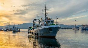 Enquête sur la pêche durable. La grande distribution… reste en rade
