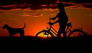 # accident animal responsabilité