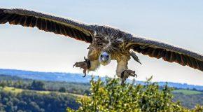 Sociétés de recouvrement – Stop au harcèlement et aux pratiques de vautours